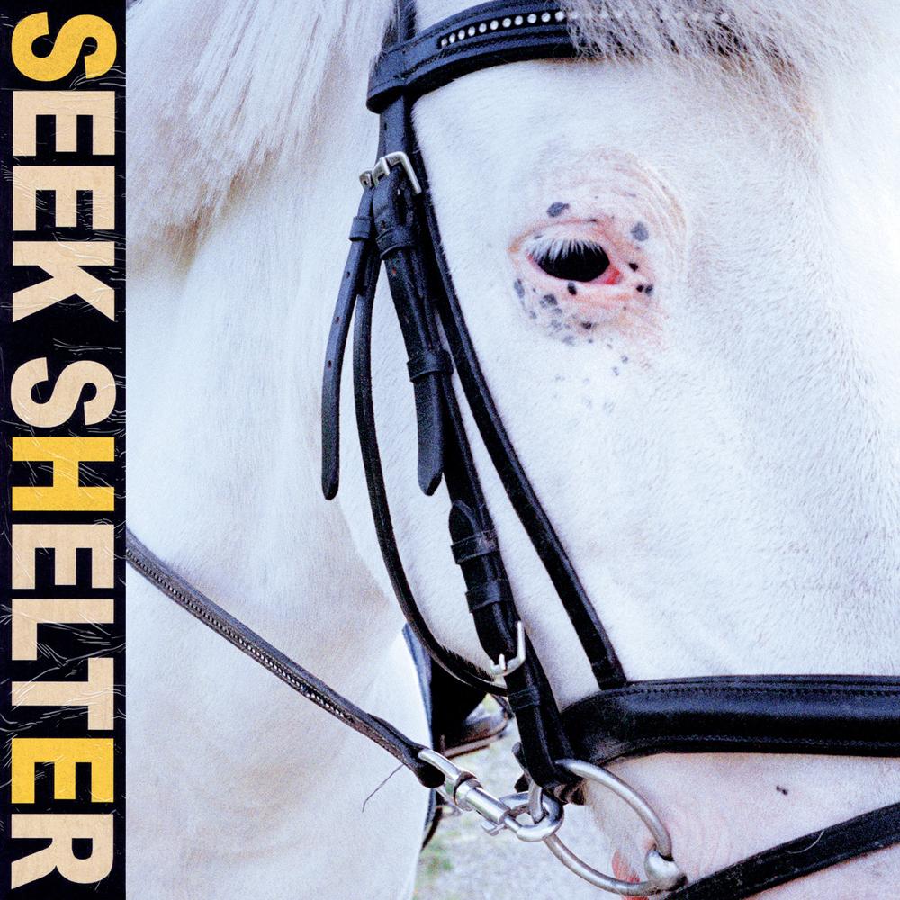 Iceage : Seek Shelter