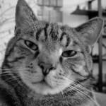 Profile picture of qqqqqq